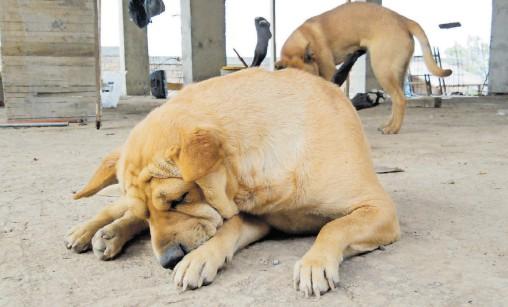 ?? / ADID JIMÉNEZ ?? ha realizado un censo para saber la cifra estimada de perros callejeros