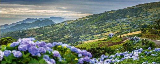 ??  ?? Acidic volcanic soil in the Azores colours wild hydrangeas blue: this is the dramatic landscape on São Jorge