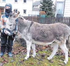 ?? FOTO: PRIVAT ?? Luke präsentierte seinen Esel.