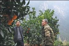 ?? WANG QUANCHAO / XINHUA ?? Mao Xianglin (right) introduces fruits grown in Chongqing's Xiazhuang village to a fruit dealer on Jan 6.