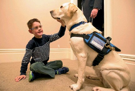 ?? PHOTO: JOSEPH JOHNSON/STUFF ?? Lachlan Carnahan's assistance dog, Lady, has helped him significantly since they were introduced to each other in February.