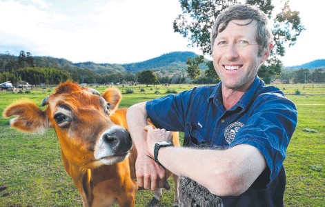 ??  ?? Dairy farmer David Tommerup with one of his cows at Kerry in the Scenic Rim. Picture: Liam Kidston