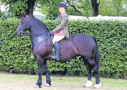 ??  ?? The overall ridden HOYS M&M title was won by Claire Evans and Yswain Ameranthus, above, whilst Victor of Alltna Calleach was first in the working Highland pony class, below.