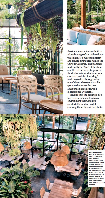 ??  ?? Clockwise from top: The pleasant outdoor terrace has filtered natural light and comfortable cane sofas; A custom made chandelier with live plants growing out of it is the focal point of the double height dining space; A more intimate bar and dining area can be found in the annexe