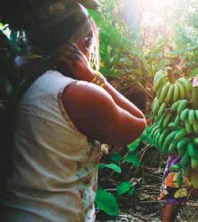 ??  ?? Mujeres del pueblo xikrin en Brasil, llevando a cabo labores de recolección de banano y papaya.