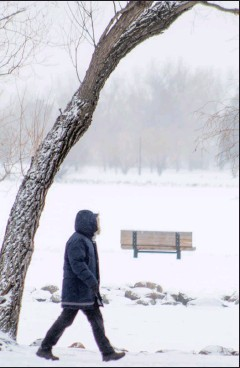 ?? Herald photo by Greg Bobinec ?? A walker bundles up in their warmest winter apparel to get outside for some physical activity, as temperatures begin to drop to near -30 C. @GBobinecHerald