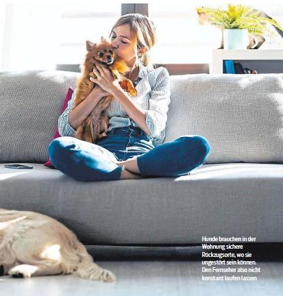 ??  ?? Hunde brauchen in der Wohnung sichere Rückzugsorte, wo sie ungestört sein können. Den Fernseher also nicht konstant laufen lassen