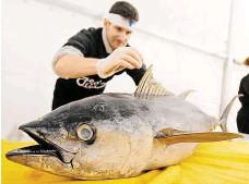 ?? Je zákazníkům ukazovat, jak s rybami nakládat ?? Jedním z cílů
