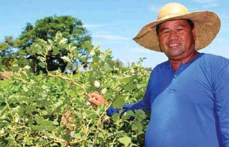 ??  ?? Bonito Salazar was able to harvest at least 110 kilos of native eggplant from his 500square-meter backyard plantation, from his former average of only 35 to 40 kilos per harvest.