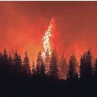 ?? NOAH BERGER/AP ?? Flames from the Dixie Fire crest a hill in Lassen National Forest, Calif., near Jonesville on Monday.