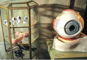 """??  ?? Medical models and prosthetics figure prominently in the museum's """"Flesh and blood, and ..."""" collection."""