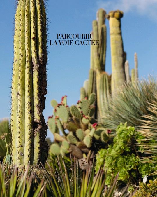 ??  ?? PAGE DE GAUCHE Malgré les attaques du temps, cette cactée neobuxbaumia se dresse fièrement dans la partie sud du jardin exotique. PAGE DE DROITE À mesure qu'il grandit, le yucca rostrata, une succulente caractéristique des déserts nord-américains, rabat ses feuilles mortes contre son tronc.