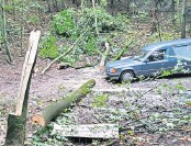 ?? FOTO: DANIEL FÖRSTER ?? Die Unglücksstelle befindet sich nahe eines Wegs in einem Waldstück im Breiten Grund. Hier fanden am Sonnabend Passanten den 46-Jährigen leblos unter dem Stamm des abgesägten Spitzahorns.