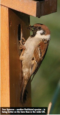 ??  ?? Tree Sparrow – another Red-listed species – is faring better on the farm than in the wider UK.
