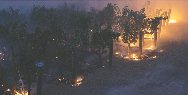 ?? Adrees Latif / REUTERS ?? A vineyard burns from the encroaching Glass Fire in Deer Park, Calif., on Sunday. On Monday, fire roared into Santa Rosa, damaging eastern parts of the community.