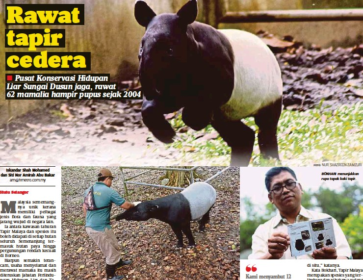 ?? FOTO: NUR SHAZREEN ZAMZURI ?? BOKHARI menunjukkan rupa tapak kaki tapir.