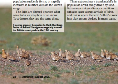 ??  ?? It seems scarcely believable to think that large flocks of Pallas's Sandgrouse regularly roamed the British countryside in the 19th century.