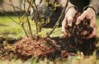 ??  ?? Quality soil is critical in helping your new tree grow, but be sure not to bury the trunk.