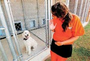 ??  ?? Heather Hood waves at her dog in training, Boomer, inside the kennels at the dog training facility in McLoud.