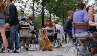 ?? AMaNDa saBGa / BostoN HeRaLD ?? WE'RE NEXT? This dog, along with others, enjoy lunch with their owners on the patio at Tatte in Boston's Seaport on a cloudy day.