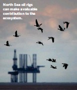 ??  ?? North Sea oil rigs can make a valuable contributi­on to the ecosystem.