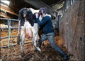 ??  ?? Elsa Louvet est à la fois vétérinaire et ostéopathe bovine.