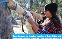 ??  ?? Tania Larsson, co founding member of Dene Nahjo and moosehide tanning instructor, ties a moose skin to a wooden pole in Yellowknife. — AFP photos
