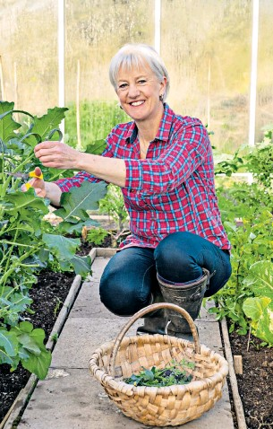 ??  ?? i Clare harvests broccoli from the greenhouse as part of her experiment to eat only British food this year
