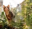 ?? Foto: Franziska Gabbert, tmn ?? Netze bewahren Katzen vor dem Sprung vom Balkon. Vermieter dürfen diese nicht einfach verbieten.