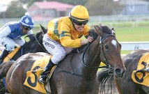 ?? Photo / Race Images ?? Tavi Mac will be hard to beat in the Matamata Cup.