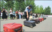 ?? WANG YANBING / FOR CHINA DAILY ?? A drug detection dog sniffs suitcases as it searches for illicit drugs in a demonstration given by police in Yinan county, Shandong province, on Wednesday, three days before the International Day Against Drug Abuse and Illicit Trafficking.