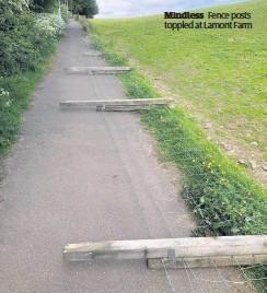 ??  ?? Mindless Fence posts toppled at Lamont Farm