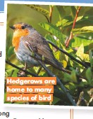 ??  ?? Hedgerows are home to many species of bird