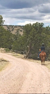 ??  ?? SCENIC ROUTE: Bobbie Lieberman rides down the driveway. Right: Barn kitty Amada, 14, is thriving in New Mexico.