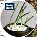 ??  ?? Spring onions