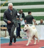 ??  ?? Akita branco com Pedro Lang, que cria a raça há 30 anos