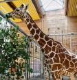 ?? Foto: Peter Fastl ?? Der Augsburger Zoo empfängt bereits seit Längerem wieder Besucher. Die Tierhäuser blieben aber geschlossen. Das ändert sich nun.