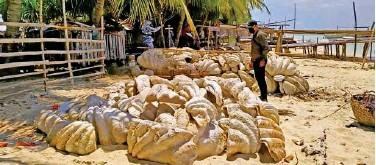 ?? Agence France-presse ?? ↑ Coast guard personnel inspect seized giant clam shells on Green island in Roxas, Palawan, on Saturday.