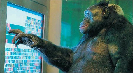 """?? First Run Feature Release ?? A BONOBO named Kanzi is shown in the new documentary """"Unlocking the Cage,"""" which details the fight in the U.S. for animal rights."""