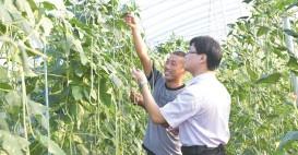 ??  ?? 农行客户经理到贫困户蔬菜大棚中了解蔬菜生长情况