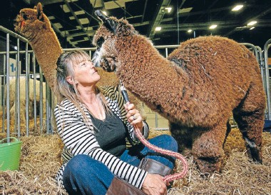 ??  ?? Taranaki alpaca breeder Lynette Gopperth with Mario Lanza at the Alpaca Expo held at Mystery Creek.