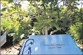 ?? GenaroMolina Los Angeles Times ?? ST. JOHN'S HEALTH CENTER in Santa Monica planted a tree on its grounds to recognize Paula Kent Meehan's donation pledge, which she revoked in 2013.