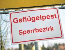 ?? FOTO: ARNO BURGI ?? Für die Landkreise Schwarzwald-Baar und Tuttlingen werden Sperrbezirke rund um den Fundort des erkrankten Vogels erwartet.