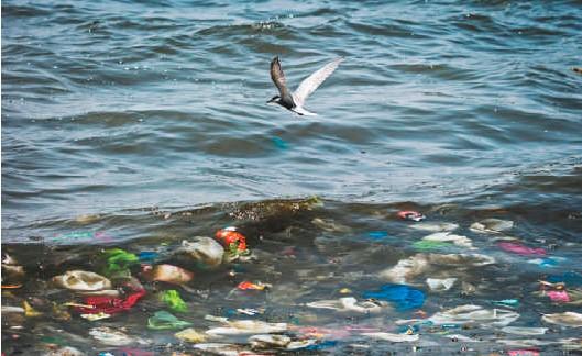 ??  ?? El año pasado en Colombia consumieron 1,4 millones de toneladas de plástico, de las cuales solo reciclaron el 20 por ciento.