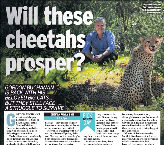 ??  ?? Spotted! Gordon Buchanan seems to be accepted by the cheetahs