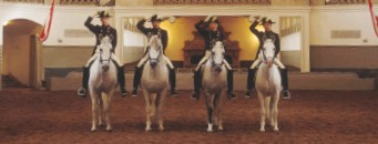 ??  ?? The Lipizzaners for the Spanish Riding School in Vienna descend from Austria's imperial stud