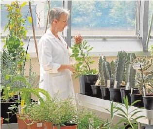 ?? // ABC ?? La Temperature House (a la izquierda) es el espacio en el que se exhiben las plantas más grandes de Kew Gardens, un templo en el que se investigan las especies amenzazadas por el cambio climático