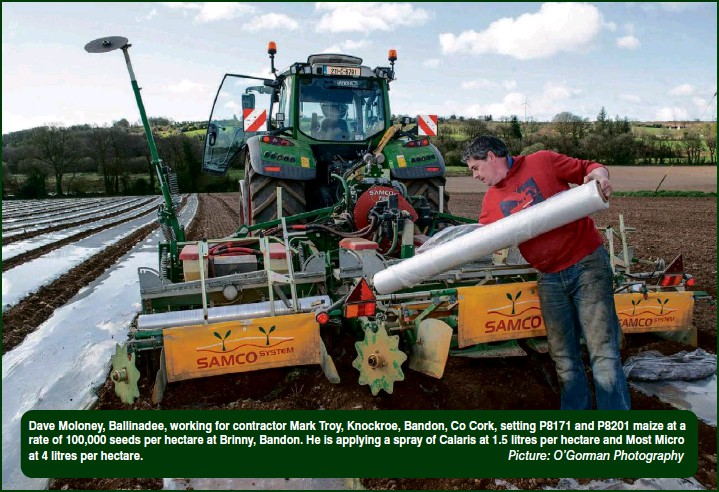 ??  ?? Picture: O'gorman Photography Dave Moloney, Ballinadee, working for contractor Mark Troy, Knockroe, Bandon, Co Cork, setting P8171 and P8201 maize at a rate of 100,000 seeds per hectare at Brinny, Bandon. He is applying a spray of Calaris at 1.5 litres per hectare and Most Micro at 4 litres per hectare.