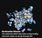 ??  ?? Nicotinamide Riboside The molecule which may help us stay healthy and more active as we go through life!
