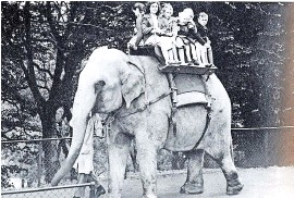 ??  ?? Meena the elephant at Dudley Zoo in the 1950s